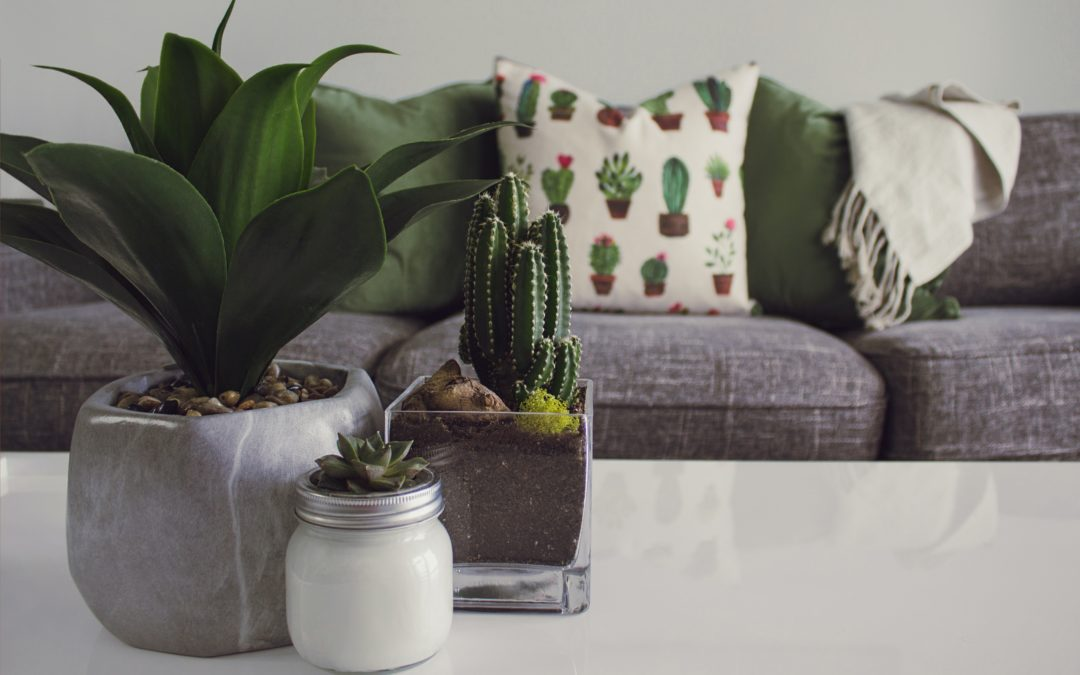 Our top tips for going green at home