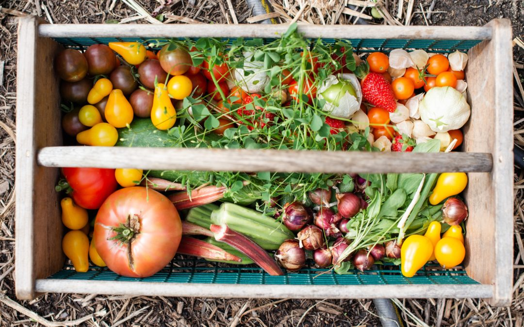 Vegetables and Herbs to Plant in your Garden this Spring